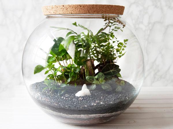 Best Plants For Closed Terrariums Plant Index