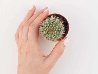 How Often to Water Cactus?