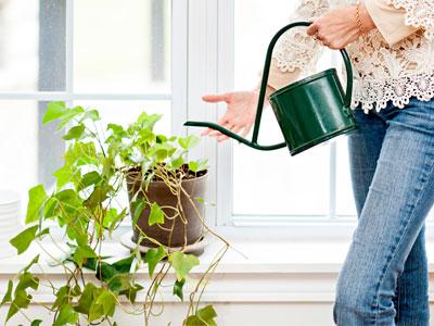 How Often Should You Water Houseplants?