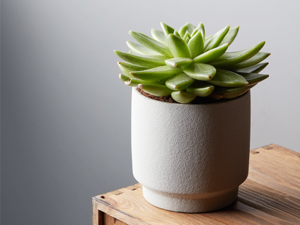 How Often To Water Succulents Plant Index