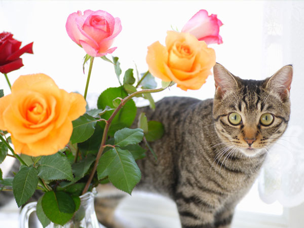 Are Roses Poisonous Plants Are They Toxic To Pets Plant Index